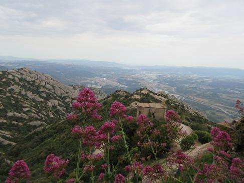 Lovely Fauna Dots the Rocky Terrain of Montserrat