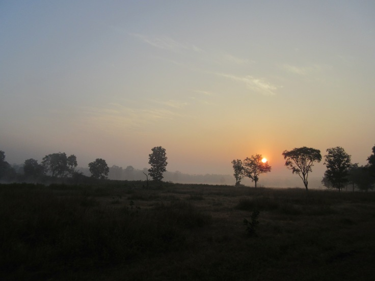 Sunrise, Mist and Sal Trees at Kanha National Park in India