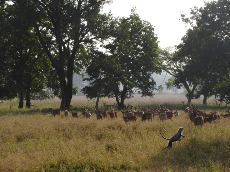 Wildlife in Kanha National Park in India