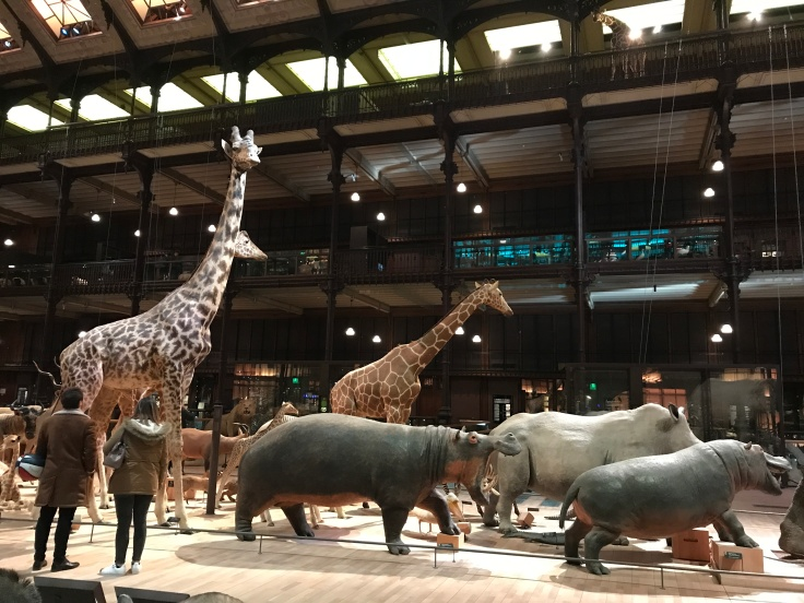 A Curious Giraffe Checks in on Visitors at the Grande Galerie de L'Évolution in Paris, France