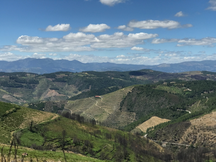 A photo of hillsides that are covered with terraced vineyards in Portugal's stunning Douro Valley.